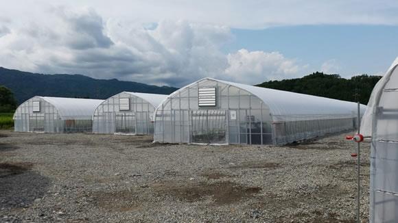 農林水産省補助事業『攻めの農業実践緊急対策事業』山形県小国町ハウス栽培施設の実施・運営サポート開始について1